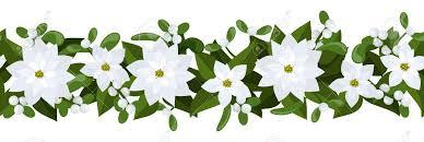 white poinsettia christmas horizontal seamless background with white poinsettia