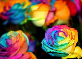 roses colors best 25 rainbow roses ideas on rainbow flowers