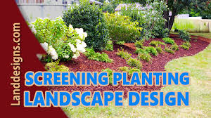 screening planting landscape design ideas youtube