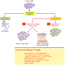 frontiers mechanisms and insights into drug resistance in cancer