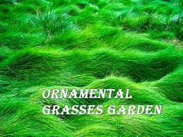 ornamental grasses garden decor tips home landscaping
