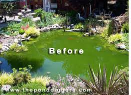 Is A Backyard Pond An Ecosystem Pond Design Gone Wrong U2013 The Pond Digger