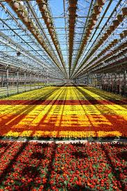 hues of orange 64 best greenhouse growings images on pinterest beautiful colors