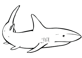 Coloring Pages Of Sharks Coloring Page Shark Printable Shark Coloring Pages Sharks Printable