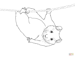 cute hamster hanging on a coloring page free printable