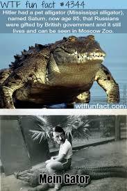 Gator Meme - nazi gator by noisykiller12 meme center