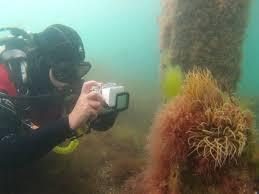 padi specialty courses padi scuba diving courses 5 star padi