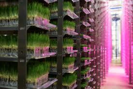 Vertical Indoor Garden by Urban Produce Vertical Farm Grows 16 Acres Of Food In Just 1 8