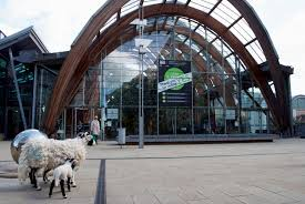 24 hour sheep tour sheffield wintergarden addicted to sheep