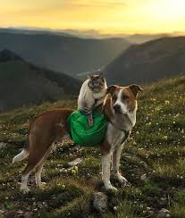 Colorado How To Travel With A Cat images This cat and dog love travelling together and their photos are epic jpg
