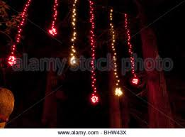 hanging christmas lights christmas lights hang in trees in the lanes area of brighton
