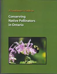 native ontario plants resources for bee friendly farmers and gardeners www seeds ca