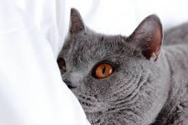 Can Bed Bugs Live On Cats How To Get Rid Of Germs On Your Bed Sheets Digital Trends