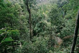 Trees Worldwide Un Led Caign That Planted 12 Billion Trees Worldwide Starts New