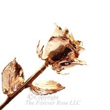 gold dipped roses gold dipped by the forever