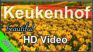 colorful flower gardens keukenhof april 2017 colorful hd video of the beautiful flower