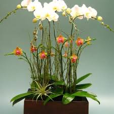Orchid Flower Arrangements Dining Room Orchid Arrangements For Your Natural Interior Accent