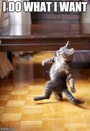 I Do What I Want Meme - cool cat stroll meme imgflip