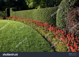 beautiful lawn hedge trimmed flowers stock photo 19629898