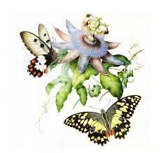 remodelaholic 25 free butterflies and moths vintage printable