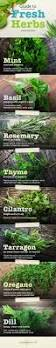best 25 kitchen herb gardens ideas on pinterest kitchen herbs