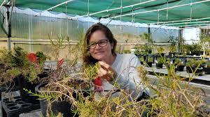 native hawaiian plant nursery maui now talk on critically endangered plant at haleakalā