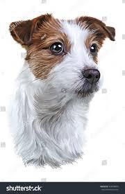 australian shepherd jack russell terrier drawing dog jack russell terrier portrait stock illustration