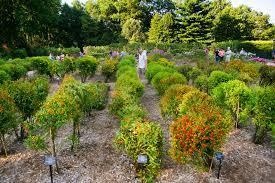native plants of montana mt cuba center communities of life mt cuba center