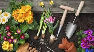 gardening tips homelife gardening tips