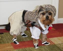 Halloween Costumes Yorkies Funny Cute Dog Halloween Costumes U2013 Photos 123 Pet