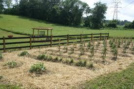 Mulching Vegetable Garden by Garden Mulching With Straw Container Gardening Ideas