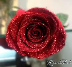tip roses 20