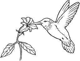 animal bird coloring page hummingbird animal coloring pages of