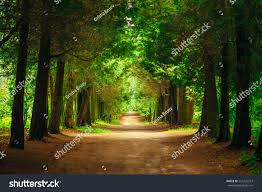 walkway path green trees forest stock photo 254322253