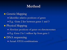 dna mapping applications of dna technology ppt