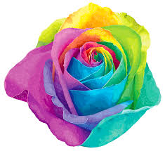 multi colored roses multicolored rainbow transparent png clip image