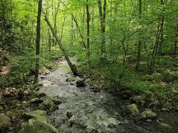 Rhode Island forest images Northeastern coastal forests wikipedia jpg
