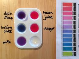 red cabbage dye and ph indicator ingridscience ca