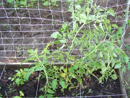Support For Climbing Plants - a shape plastic netting for plant climbing vegetable support net