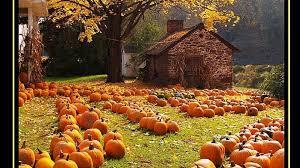 fall pumpkins wallpaper autumn harvest wallpapers wallpaperpulse