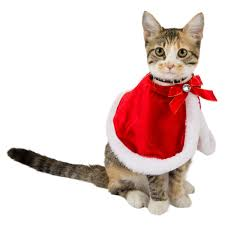 black friday petsmart black friday and cyber monday the best deals for cat lovers catster