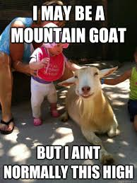 Funny Meme Captions - 35 most funny goat meme pictures and images