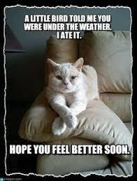 Meme Get Well Soon - vasectomy get well soon humorous vasectomy card funny pinterest