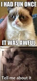 Grumpy Cat Meme I Had Fun Once - 35 funny grumpy cat memes funny grumpy cat memes grumpy cat and memes