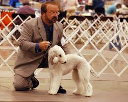 bedlington terrier stud search results casey kerries from the inside out page 7