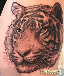 tiger by kent mcknight white tiger rochester ny