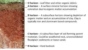 1 soils and plant nutrients nc state extension publications