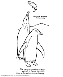 wild animal coloring pages penguin coloring kids
