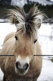 hairstyles for horses 225 best bad hair day images on pinterest cutest animals fluffy