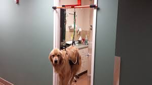the doggie lift the easiest way to cut your dog u0027s nails by eric